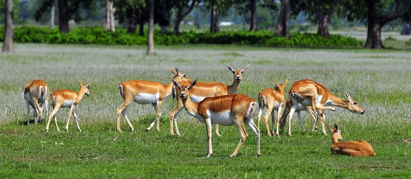 Chitwan National Park, Chitwan Tour, Visit Chitwan